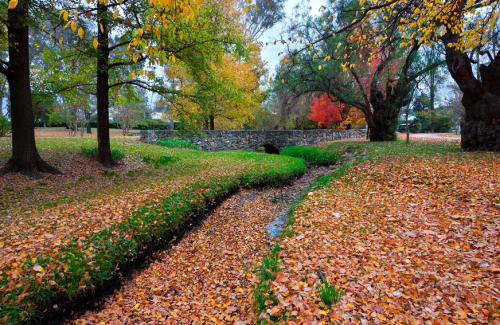 Autumn colours enhance this beautiful location in Mudgee, NSW, Australia