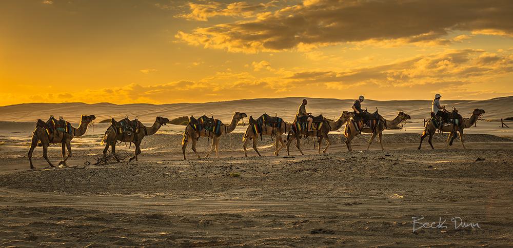 Model Camel Caravan Caravan On Silk Road Movies In Theaters